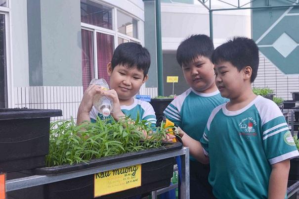 Bé trường tiểu học trồng rau sạch bán cho phụ huynh-5