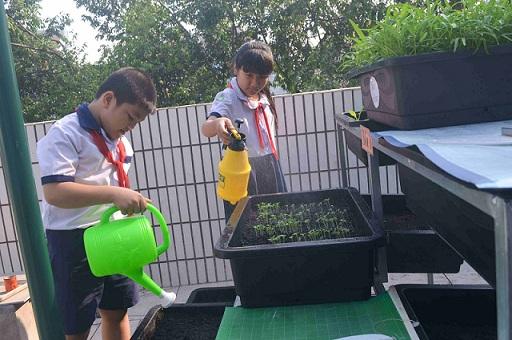 Bé trường tiểu học trồng rau sạch bán cho phụ huynh-6
