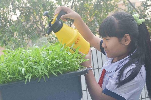 Bé trường tiểu học trồng rau sạch bán cho phụ huynh-7