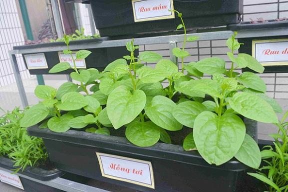 Bé trường tiểu học trồng rau sạch bán cho phụ huynh-10