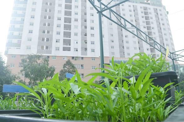 Bé trường tiểu học trồng rau sạch bán cho phụ huynh-12