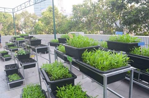 Bé trường tiểu học trồng rau sạch bán cho phụ huynh-13