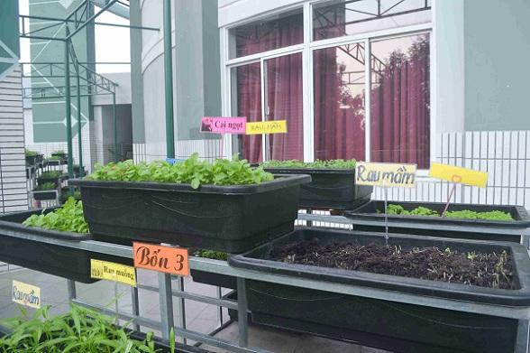 Bé trường tiểu học trồng rau sạch bán cho phụ huynh-14