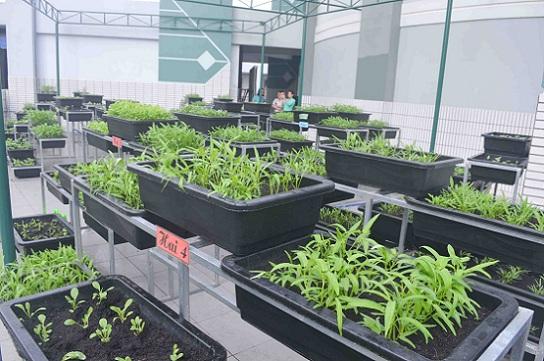 Bé trường tiểu học trồng rau sạch bán cho phụ huynh-15