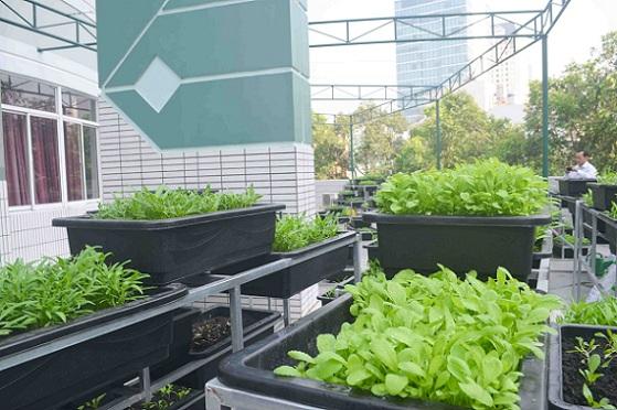 Bé trường tiểu học trồng rau sạch bán cho phụ huynh-16