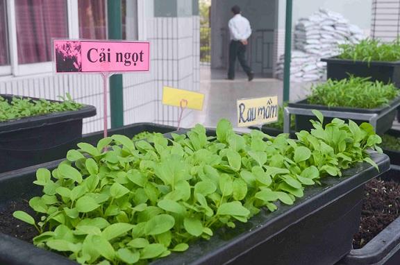 Bé trường tiểu học trồng rau sạch bán cho phụ huynh-17