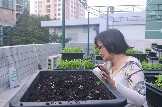 Bé trường tiểu học trồng rau sạch bán cho phụ huynh-19