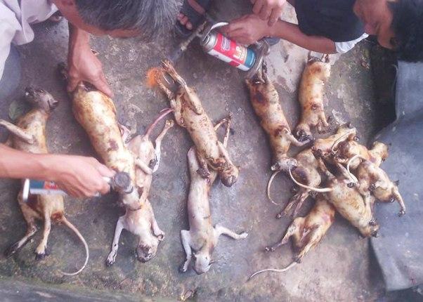 Giết khỉ, khoe trên Facebook: Lộ đường dây mua bán động vật quý hiếm-3