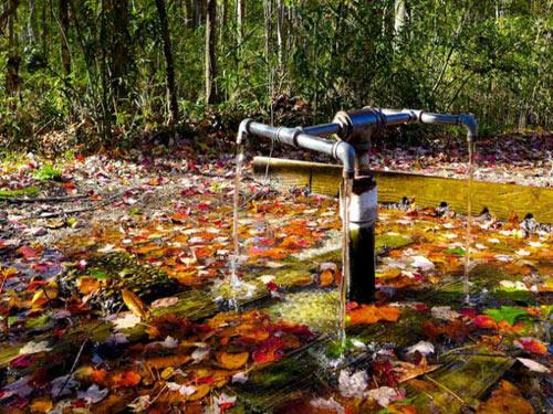 Bí ẩn những dòng suối có khả năng 'cải tử hoàn sinh'-2