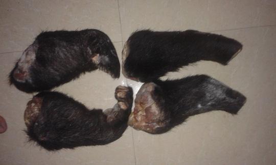 Rao bán hổ, gấu, đại bàng công khai trên facebook-5