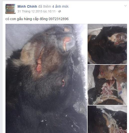 Rao bán hổ, gấu, đại bàng công khai trên facebook-6