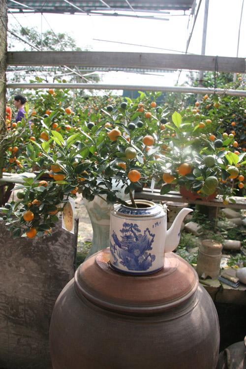 dan sanh choi dua nhau san quat bonsai rong phuong - 11