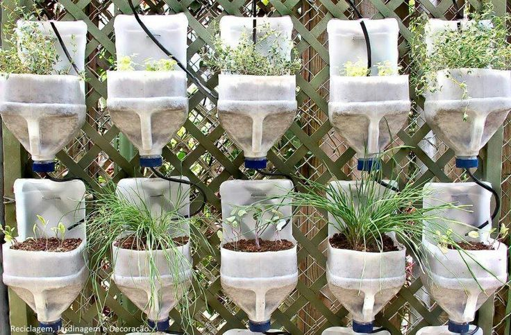 Muôn kiểu trồng cây không cần vườn cho nhà nhỏ-1