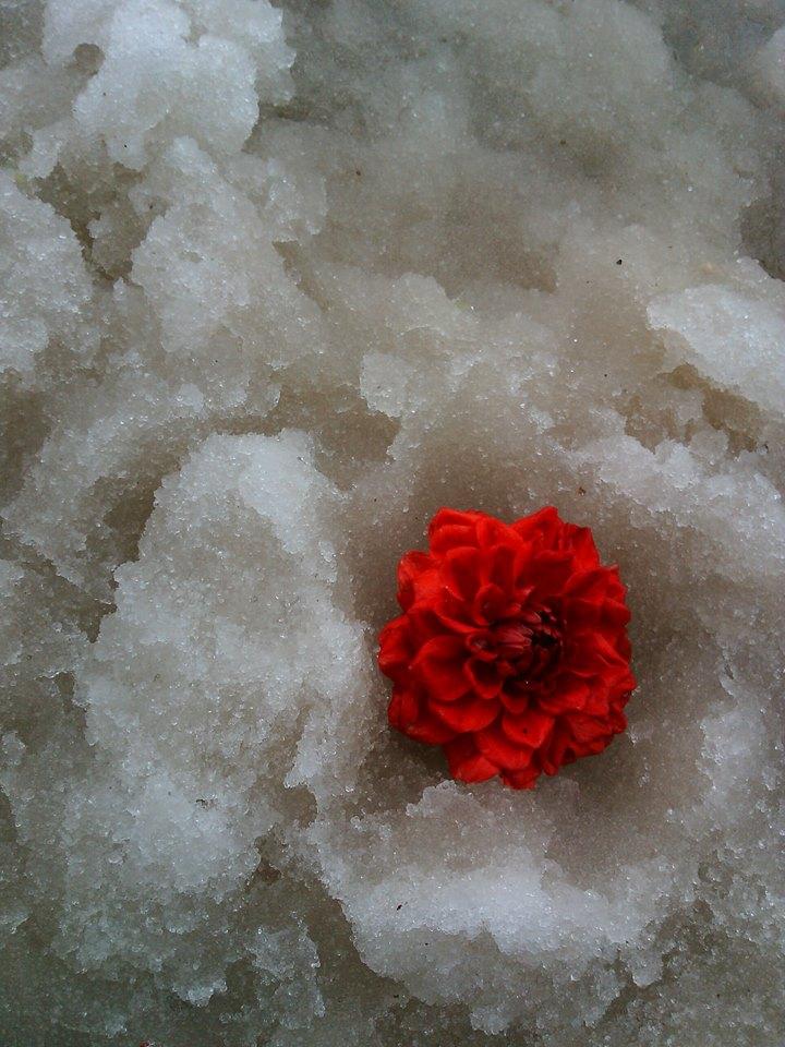 3 buoc cuu cay hoa, rau sach song sot qua ngay bang tuyet - 3