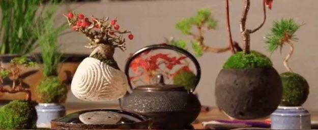the gioi phat sot voi cay bonsai biet bay 4 trieu dong - 8