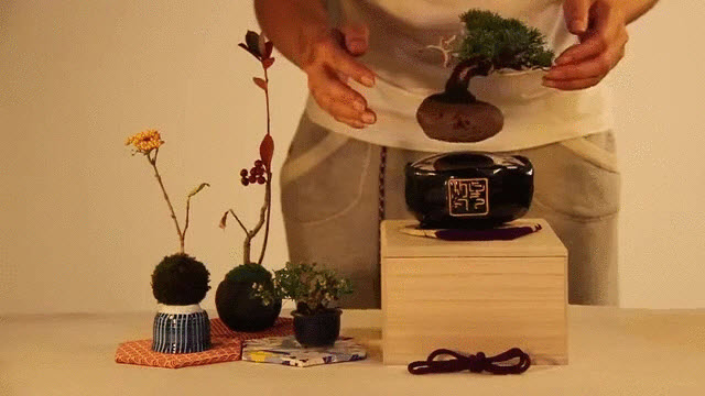 the gioi phat sot voi cay bonsai biet bay 4 trieu dong - 3