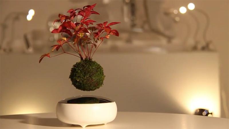 the gioi phat sot voi cay bonsai biet bay 4 trieu dong - 2