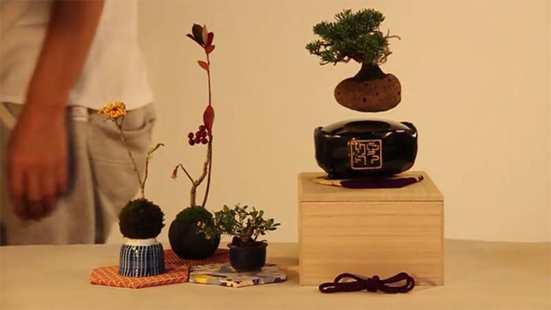 the gioi phat sot voi cay bonsai biet bay 4 trieu dong - 4