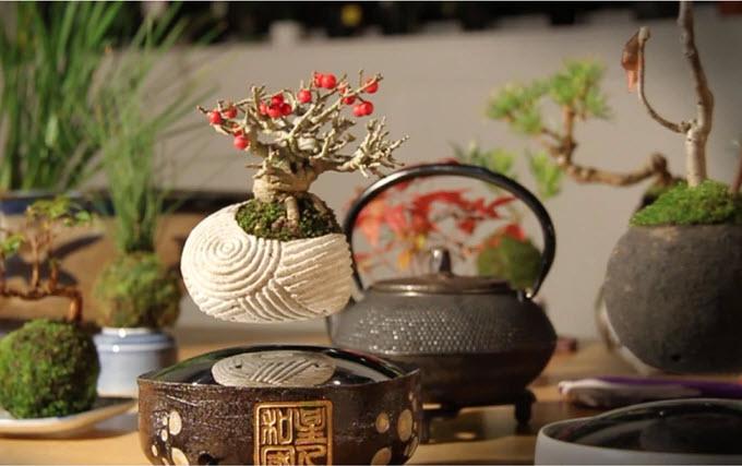 the gioi phat sot voi cay bonsai biet bay 4 trieu dong - 5