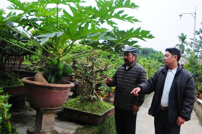 "du du bonsai ""dem qua ra tien"" hut khach dip tet - 11"