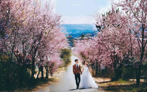 Đẹp mê hồn bộ ảnh cưới ngập tràn sắc hoa ngày xuân-8