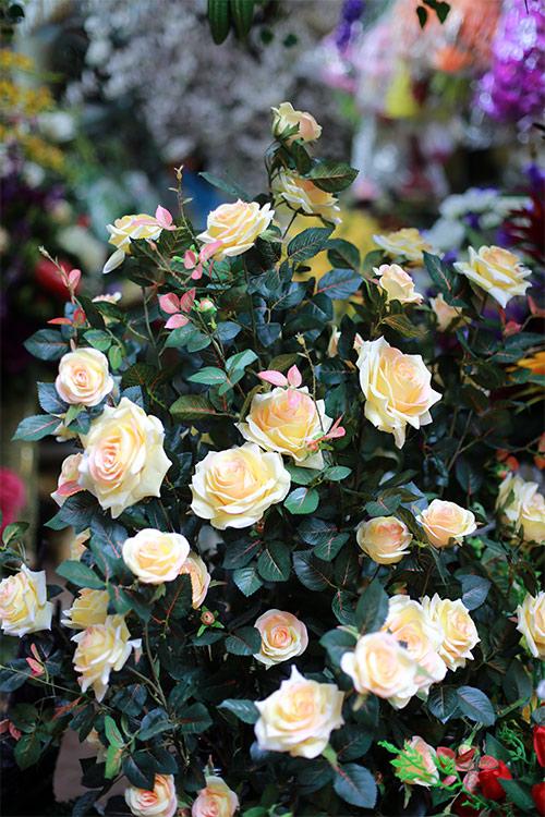 cuoi nam, chi em do xo di cho hoa co nhat ha thanh - 12