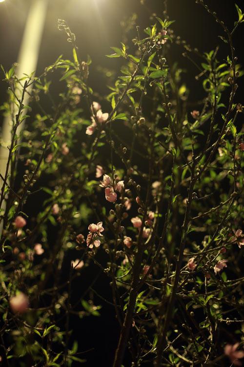 cho hoa dao dem nhon nhip ngay cuoi nam - 7