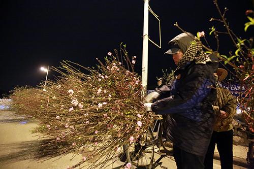 cho hoa dao dem nhon nhip ngay cuoi nam - 12