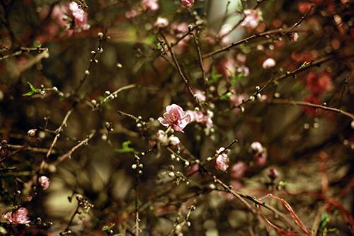 cho hoa dao dem nhon nhip ngay cuoi nam - 6