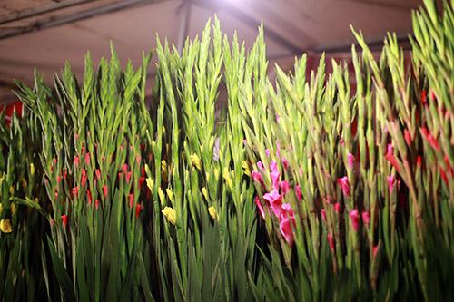 cho hoa quang ba tap nap ngay cuoi nam - 12