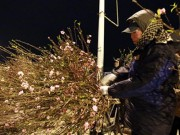 Tin tức - Chợ hoa đào đêm nhộn nhịp ngày cuối năm