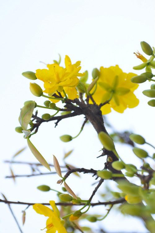 thị truòng hoa tét tp. hcm dua nhau khoe sac - 2