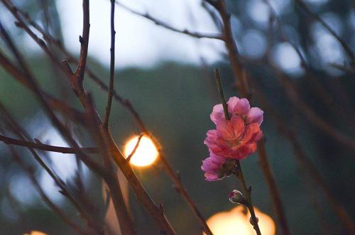 thị truòng hoa tét tp. hcm dua nhau khoe sac - 15