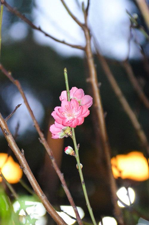 thị truòng hoa tét tp. hcm dua nhau khoe sac - 16