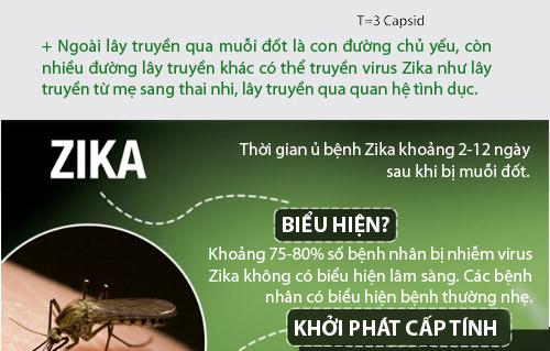 [infographic] nhung dieu nguoi viet phai biet ve virus 'an nao' zika - 5