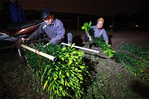 Chợ ly đêm làng Tây Tựu tấp nập ngày cuối năm-12