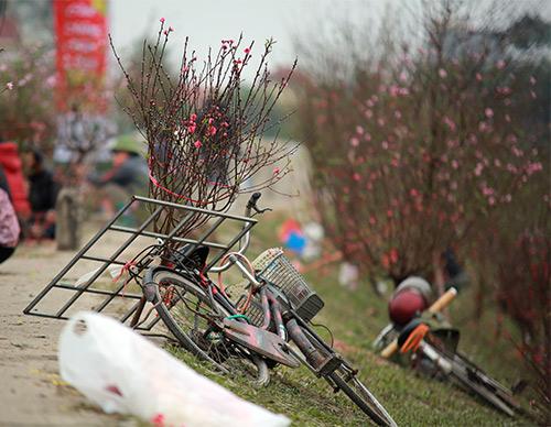 """Chợ hoa Quảng Bá """"nêm"""" chặt người những ngày cuối năm-14"""