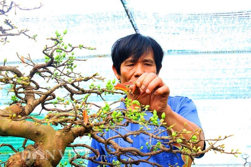 """man nhan ngam ve dep """"hut mat"""" cua goc mai bonsai binh dinh - 4"""