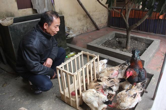 """Những loại chim lạ, gà độc tiền triệu vẫn """"cháy hàng"""" dịp Tết 2016-1"""