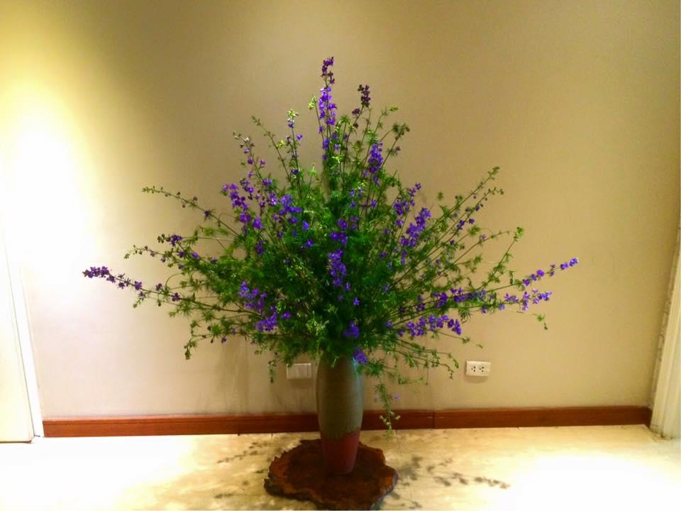 cam hoa violet tuoi lau den 7 ngay - 1