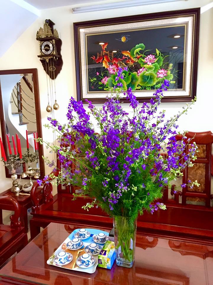 cam hoa violet tuoi lau den 7 ngay - 2