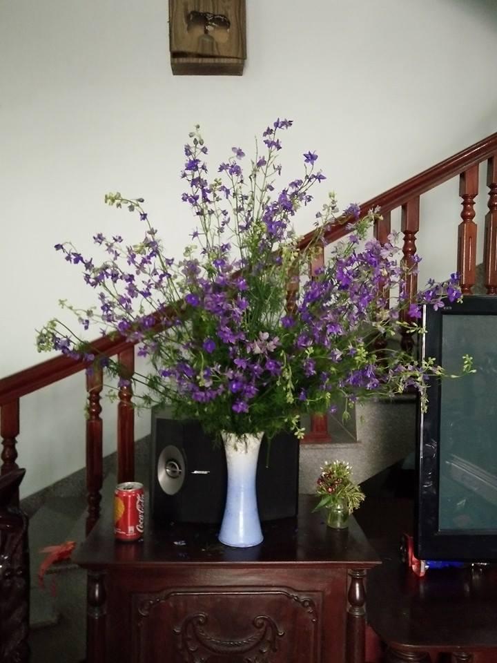 cam hoa violet tuoi lau den 7 ngay - 3