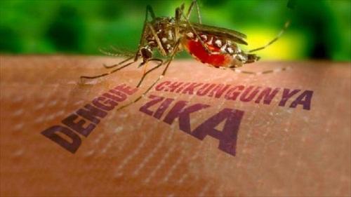 virus zika vao trung quoc, viet nam keu goi nguoi dan phong dich - 1