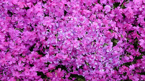 vuon hoa tuyet dep ong lao trong tang nguoi vo mu - 4
