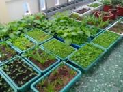 Nhà đẹp - Ông bố trẻ trồng trăm thùng rau sạch cho vợ, cho con