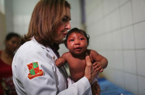 phat hien them mot loai muoi co the truyen virus zika - 2