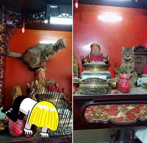 "nhung chu meo thich treo ban tho ""buon hoa qua"" - 11"