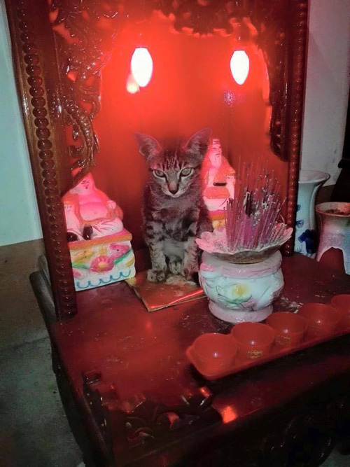 "nhung chu meo thich treo ban tho ""buon hoa qua"" - 14"