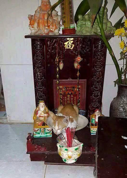 "nhung chu meo thich treo ban tho ""buon hoa qua"" - 2"