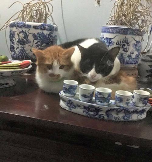 "nhung chu meo thich treo ban tho ""buon hoa qua"" - 6"